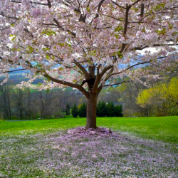 tree, earth day, spring
